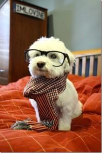 cachorro-com-lenco