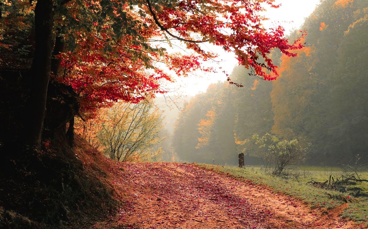 Outono: 5 destinos nacionais para conhecer nessa estação.